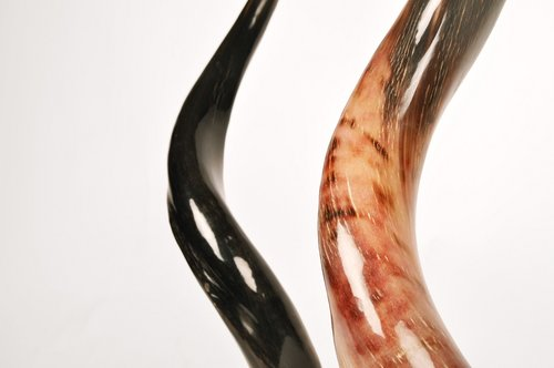 Safari Horn Brown